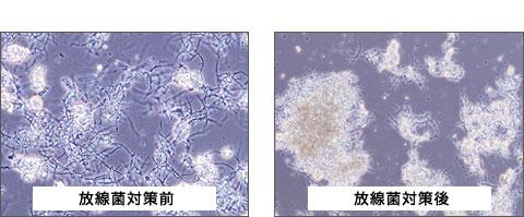 放線菌対策放線菌対策